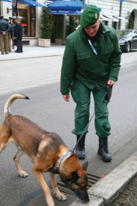 This picture shows a dog on a leash, sniffing along the street with a military handler.
