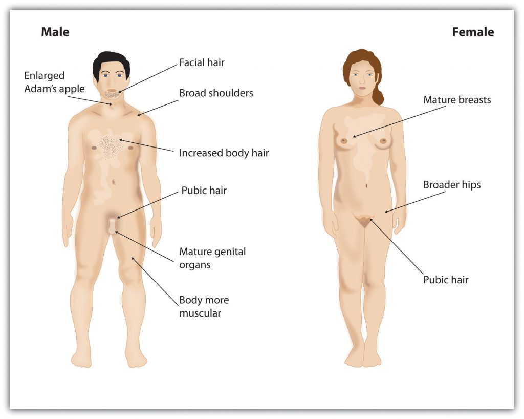 This diagram illustrates the primary and secondary sex characteristics of the human male and female bodies.