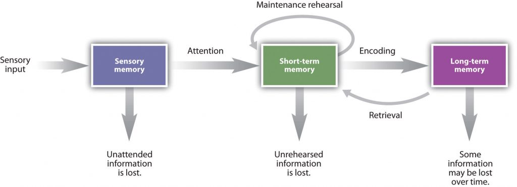 This diagram illustrates memory duration as sensory input potentially transitions from sensory memory to short-term memory and then to long-term memory.