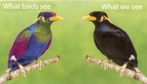 This modified picture shows a bird in multiple colours and a mirror image of the same bird but almost entirely black.
