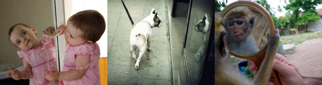 On the left, a human baby looks into a mirror; in the centre, a dog looks into a mirror; on the right, a monkey looks into a mirror.