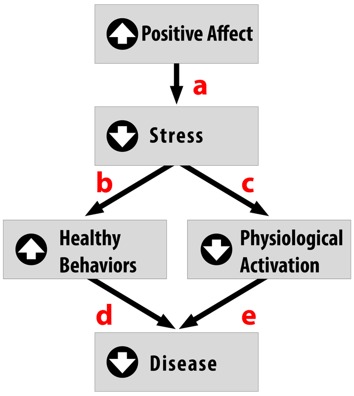 This chart identifies that increased positive affect reduces stress, increases healthy behaviours, decreases physiological activation, and decreases disease.