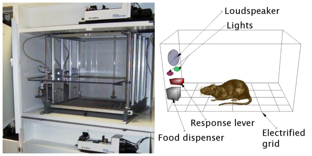 On the left, this picture shows a Skinner box; on the right, this diagram illustrates the components of a Skinner box.